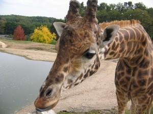 zoo-beauval-025.jpg?w=300&h=225