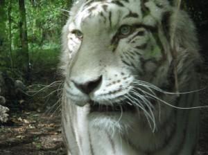 zoo-beauval-043.jpg?w=300&h=225